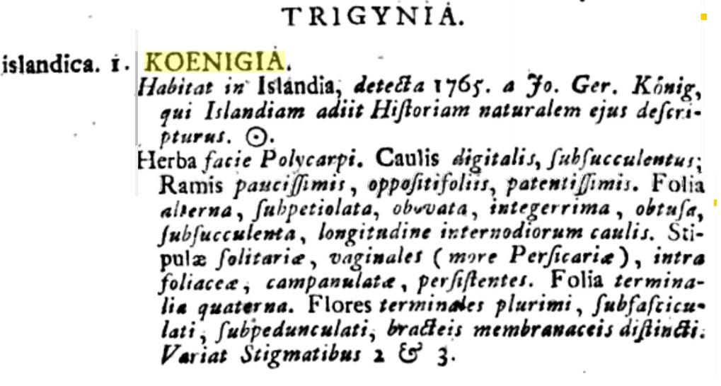 Frumlýsing Linnés á naflagrasi.