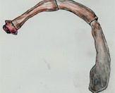 Sullaveikibandormur lifir í þörmum hunda. Teikn. ÁHB.