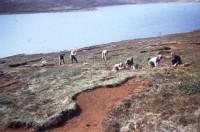 Vatnshlíð við Hvaleyrarvatn 1959. Ljósm. H.B.