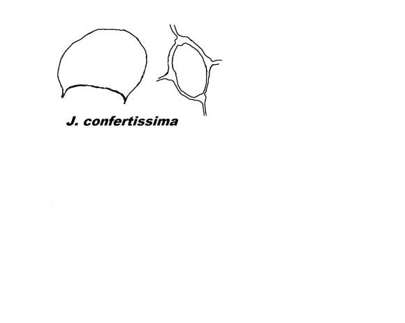 j_confert