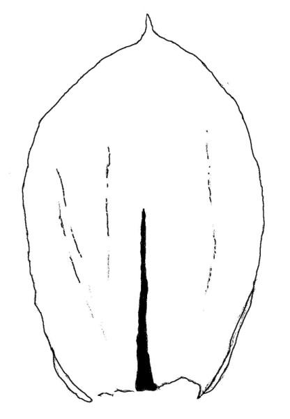 pseudosclerop_4